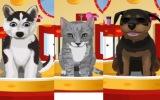 Evcil Hayvan Modası