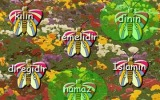 Hadis Kelebekleri