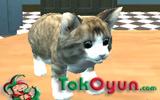 Kedi Simülatörü 3D