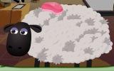 Koyun Berberi
