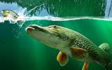 Olta İle Balık Avla